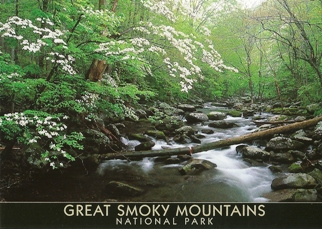 20x Postcard Of Flowering dogwood trees GREAT SMOKY MOUNTAINS  N