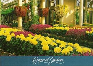 24x Postcard of Cascades of chrysanthemums Longwood Gardens