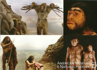 29x Postcard Anne and Bernard Spitzer Hall of Human Origins Amer