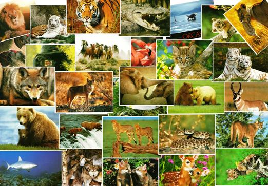 20 Premium 5x7 Animal Postcards (Slightly Damaged)
