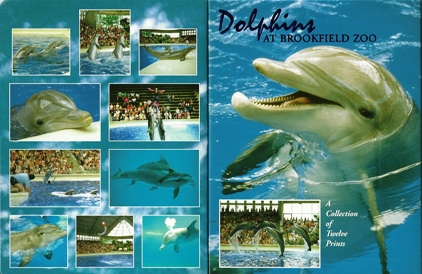 2x Dolphins At Brookfield Zoo A collection of twelve Prints, Pos