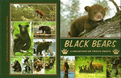 2x Black Bears A collection of twelve Prints Postcard Packet
