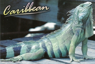 "22x Postcard Of Caribbean Native ""The Iguana""."